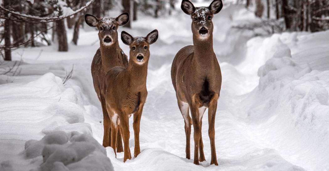 Deer Country Adventures